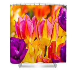 Shower Curtain featuring the photograph Tulips Enchanting 45 by Alexander Senin