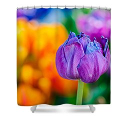 Shower Curtain featuring the photograph Tulips Enchanting 46 by Alexander Senin