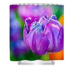 Shower Curtain featuring the photograph Tulips Enchanting 47 by Alexander Senin
