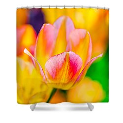 Shower Curtain featuring the photograph Tulips Enchanting 48 by Alexander Senin