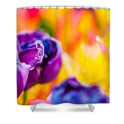 Shower Curtain featuring the photograph Tulips Enchanting 49 by Alexander Senin