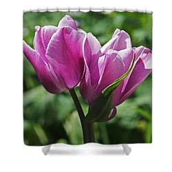 Tulips Entwined Shower Curtain by Rona Black