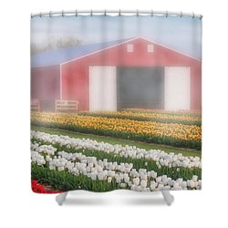 Shower Curtain featuring the photograph Tulips, Fog And Barn by Susan Candelario