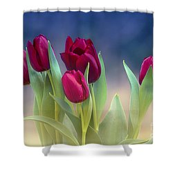 Tulips For Spring Shower Curtain