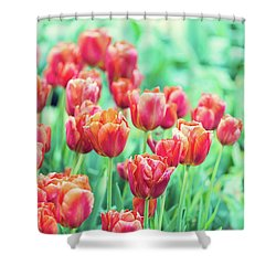 Tulips In Amsterdam Shower Curtain