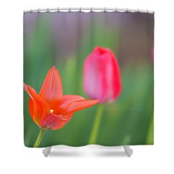 Tulips In My Garden Shower Curtain