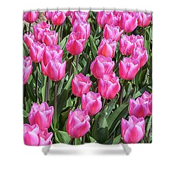 Shower Curtain featuring the photograph Tulips In Pink Color by Patricia Hofmeester