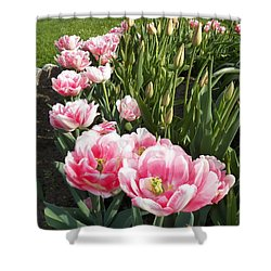 Tulips In Pink Shower Curtain