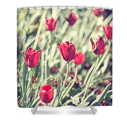 Shower Curtain featuring the photograph Tulips In Red by Wade Brooks