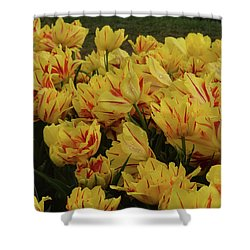 Tulips In The Garden Tulips In The Park  Shower Curtain