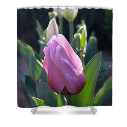 Shower Curtain featuring the photograph Tulips In The Morning 2 by Suzanne Oesterling