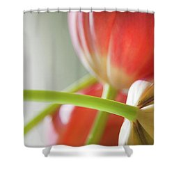 Tulips In The Morning Shower Curtain by Theresa Tahara