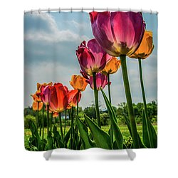 Tulips In The Spring Shower Curtain