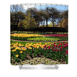 Tulips In The Spring Shower Curtain by Teresa Schomig