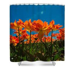 Tulips In The Sun Shower Curtain by John Roberts