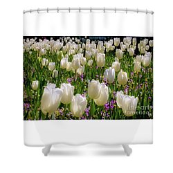 Tulips In White Shower Curtain