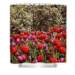 Shower Curtain featuring the photograph Tulips by Milena Ilieva