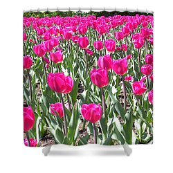 Shower Curtain featuring the photograph Tulips by Mary-Lee Sanders