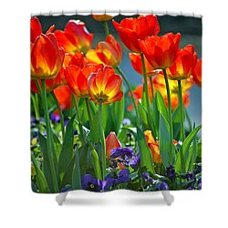 Tulips Shower Curtain by Robert Meanor
