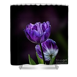 Tulips Shower Curtain by Shirley Mangini