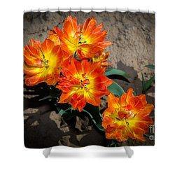 Tulips Soaking Up The Sun Shower Curtain by John Roberts