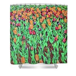 Tulips Tulips Everywhere Shower Curtain