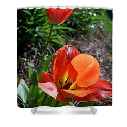 Shower Curtain featuring the photograph Tulips Wearing Orange by Sandi OReilly
