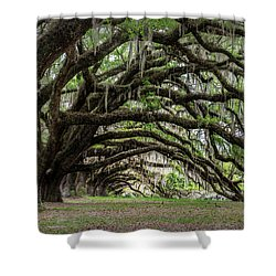 Shower Curtain featuring the photograph Tunnel In Charleston by Jon Glaser