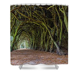 Shower Curtain featuring the photograph Tunnel Of Intertwined Yew Trees by Semmick Photo