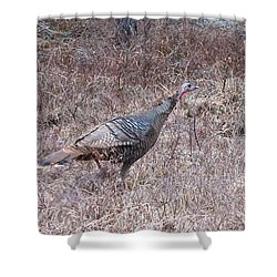 Shower Curtain featuring the photograph Turkey 1155 by Michael Peychich