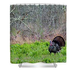 Shower Curtain featuring the photograph Turkey And Cabbage by Bill Wakeley