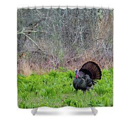 Shower Curtain featuring the photograph Turkey And Cabbage Square by Bill Wakeley