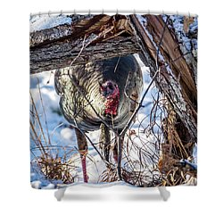 Shower Curtain featuring the photograph Turkey In The Brush by Paul Freidlund