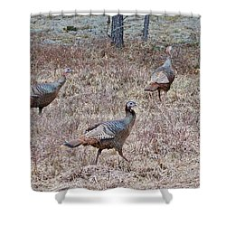 Shower Curtain featuring the photograph Turkey Trio 1153 by Michael Peychich