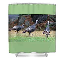 Turkey Trio Shower Curtain
