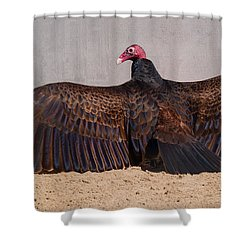 Turkey Vulture Spreading Wings Shower Curtain