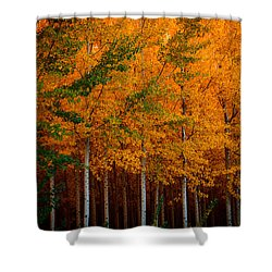 Shower Curtain featuring the photograph Turning Into Gold by Dan Mihai