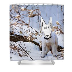 turnOmatic White Swiss Shepherd Pup Shower Curtain