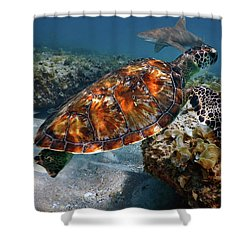 Turtle And Shark Swimming At Ocean Reef Park On Singer Island Florida Shower Curtain by Justin Kelefas