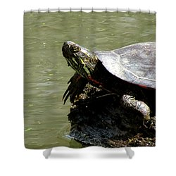 Turtle Bask Shower Curtain