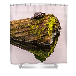 Turtle Basking Shower Curtain