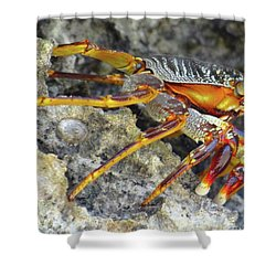 Turtle Bay Resort Watamu Kenya Rock Crab Shower Curtain