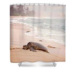 Turtle Beach Shower Curtain by Heather Applegate