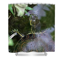 Turtle Getting Some Air Shower Curtain