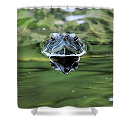 Turtle Head Shower Curtain by Karol Livote