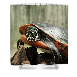 Turtle Neck Shower Curtain
