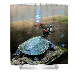 Turtle On Rock Shower Curtain
