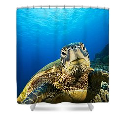 Turtle Stare Shower Curtain by Dave Fleetham - Printscapes