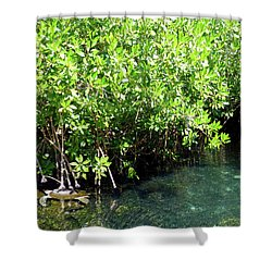 Shower Curtain featuring the photograph Turtle Swim by Francesca Mackenney