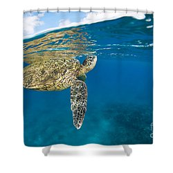 Turtle Taking A Breath Shower Curtain by Dave Fleetham - Printscapes